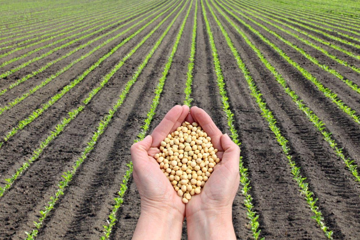 El precio de la soja alcanza un máximo de 5 años cuando China recurre a los EE.UU. en busca de suministro